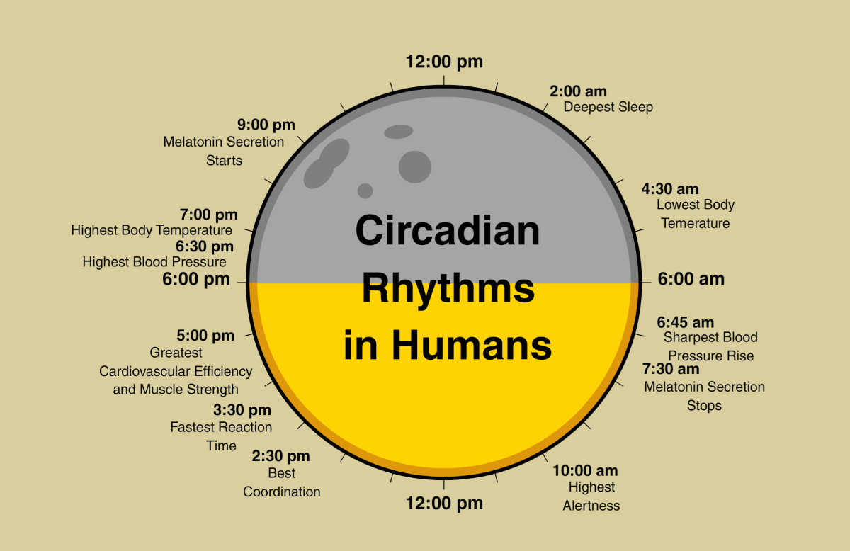 Ways To Stay Awake >> Circadian Rhythms and why its important to your skin. – Juline Hamilton